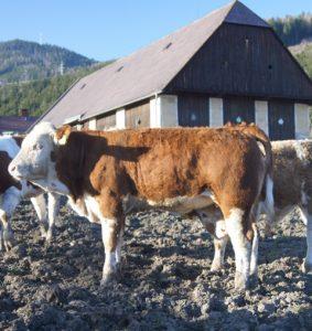 Ida pp (Kilbride Farm Newry x Haxzeus)