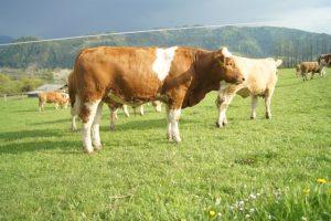 Kilbride Farm Newry Sohn